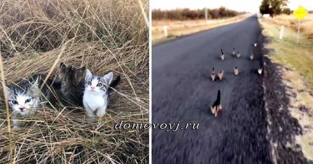Стая котят бежала за девушкой несколько километров