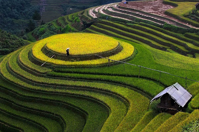 Terraces Fields - brand of Northern Vietnam.