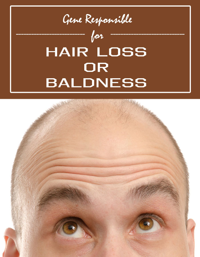 Gene Responsible for Hair Loss or Baldness
