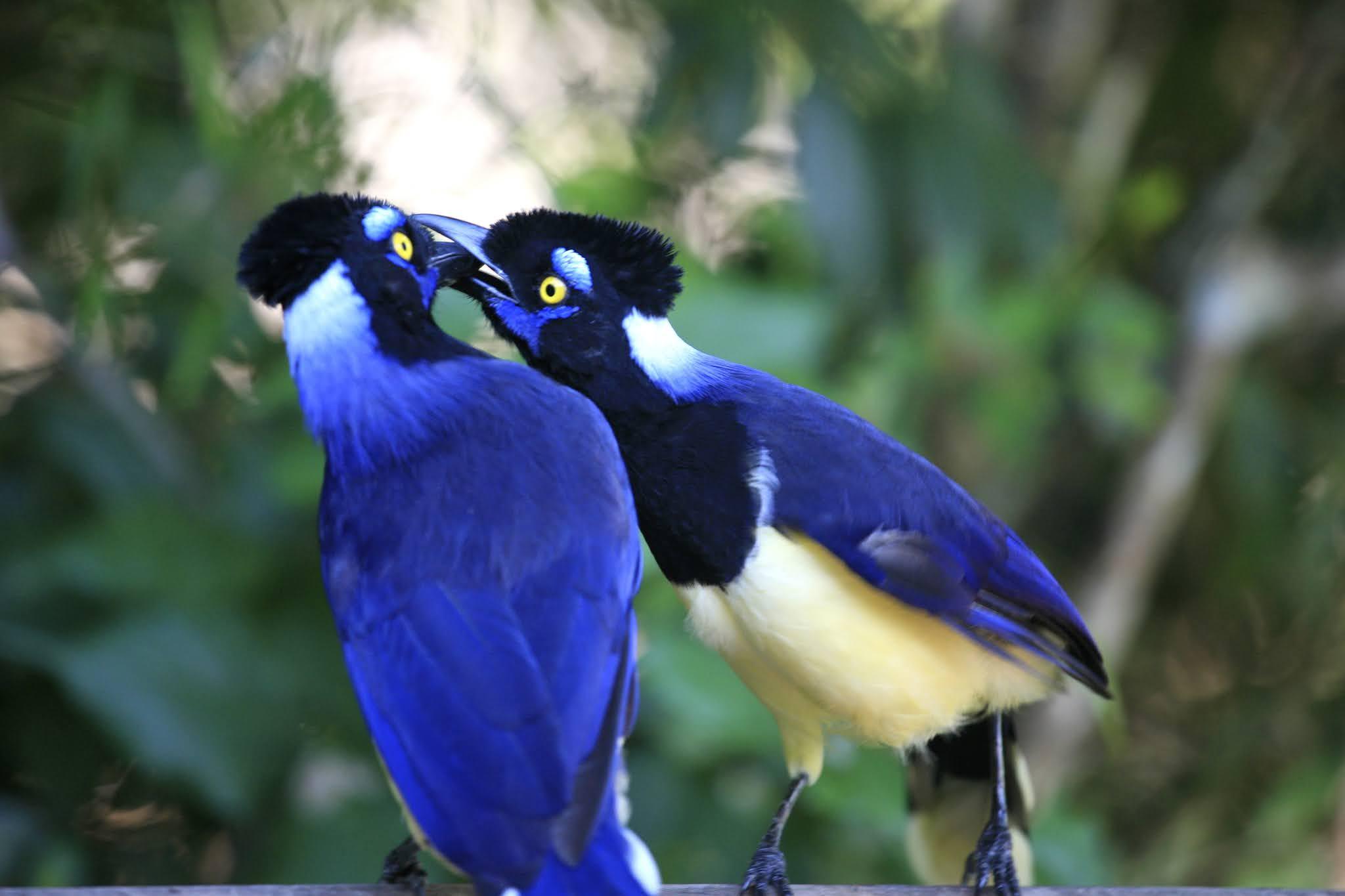 Птицы в парке Игуасу в Аргентине