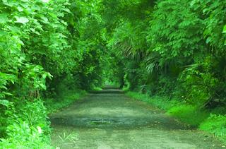 Lorong Alam