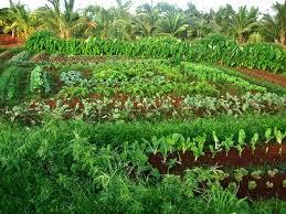 Mô hình vườn rau gia đình