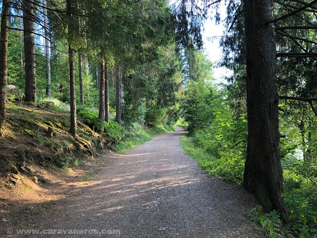 Sendero junto al Lago Titisee |Alsacia y Selva Negra en autocaravana