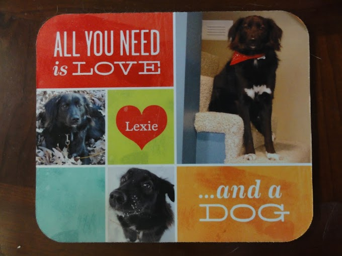 Shutterfly, Inc. Review