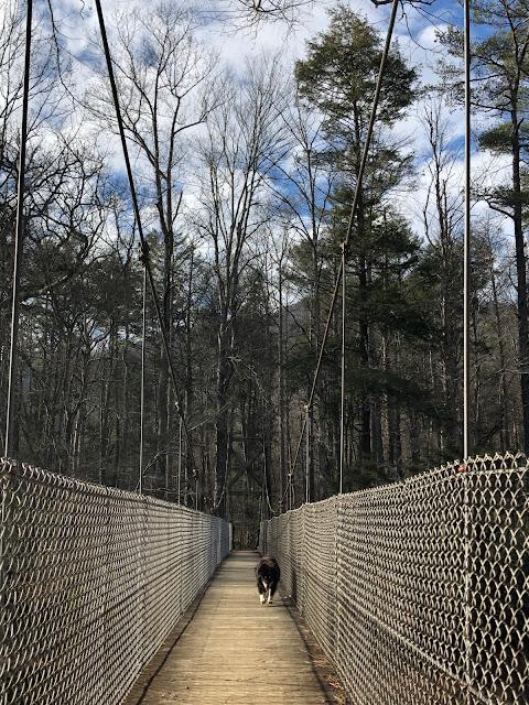 dog on suspension bridge