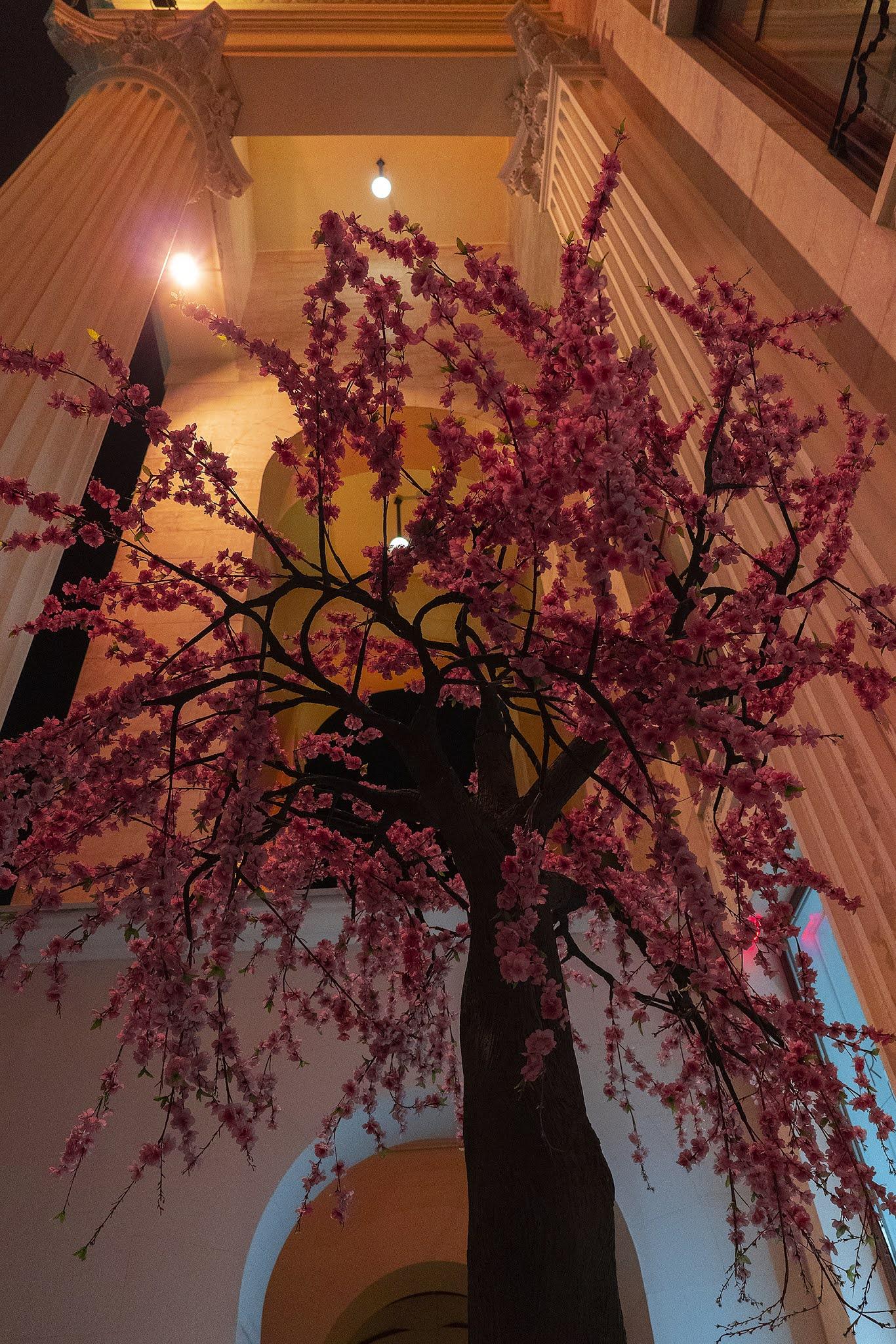 photo Igor Novik Sochi night night city sakura columns tree scenery south