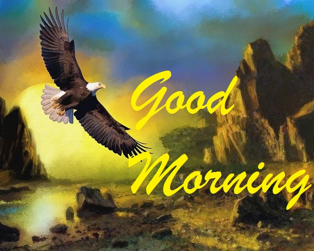 good morning bird image
