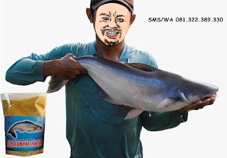 Pelet Serbuk Umpan Ikan Patin