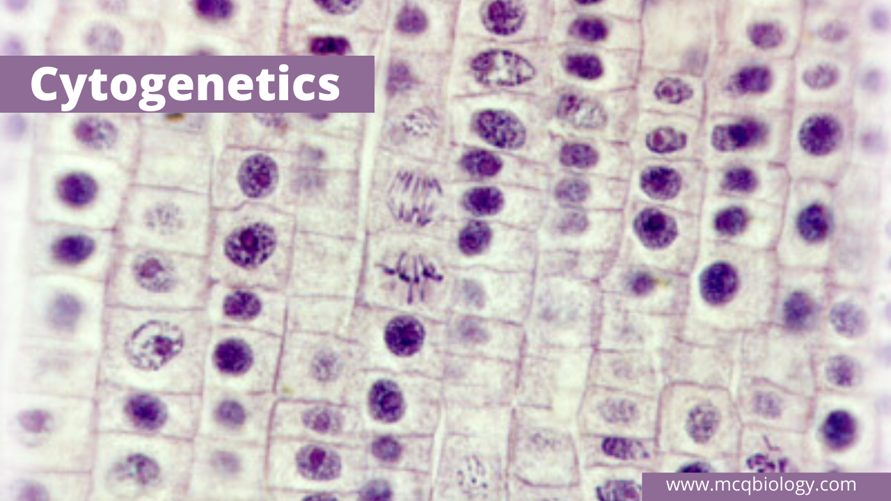 Multiple Choice Questions on Cytogenetics