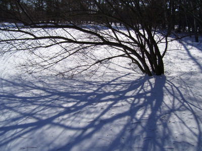 shadow of branches on snow