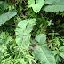 Plantas da Amazônia são eficazes para tratar picadas de serpentes venenosas, aponta pesquisa