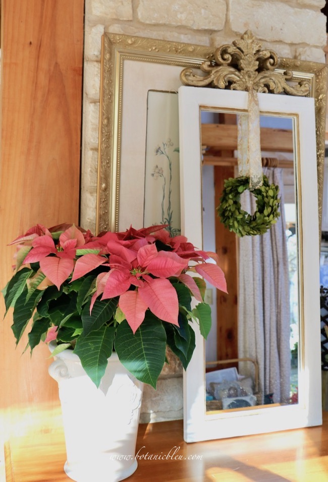 French country mirror decorated for Christmas with a large pink poinsettia will last the entire holiday season