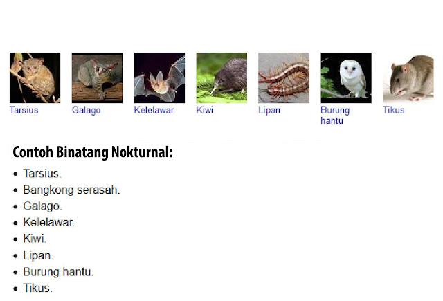 Contoh Binatang Nokturnal