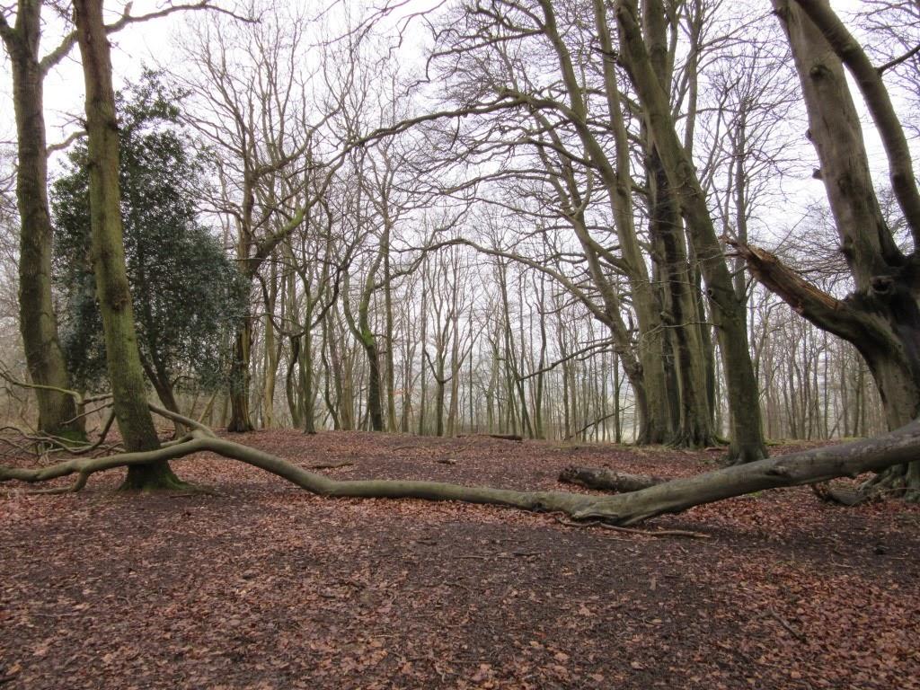Ashridge Estate National Trust