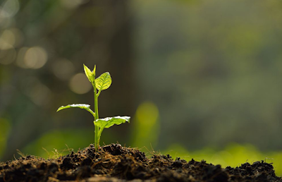 Pertumbuhan Primer pada Tumbuhan, Pertumbuhan Sekunder pada Tumbuhan, Pertumbuhan Primer, Pertumbuhan Sekunder, Pertumbuhan Primer dan Sekunder.