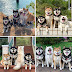 40 Hilarious Dog Posts To Put A Smile On Your Face