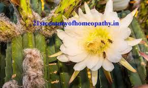 Cactus Grandiflours