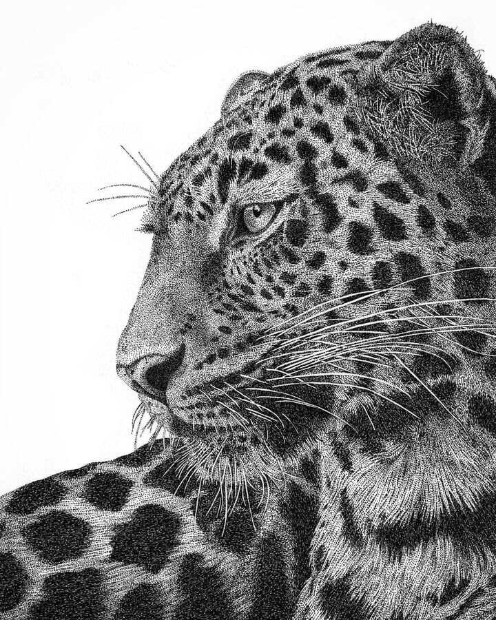 03-Leopard-Carole-Levy-www-designstack-co