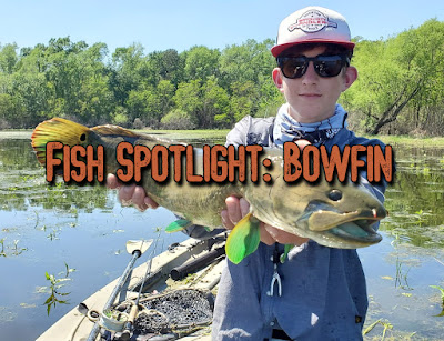 Bowfin, Grindle, Dogfish, Ginnel, Cypress Trout, Mud Fish, Blackfish, Choupic, Fly Fishing for Bowfin, Bowfin on the Fly, Fishing for Bowfin, Bowfin in Texas, Choupique