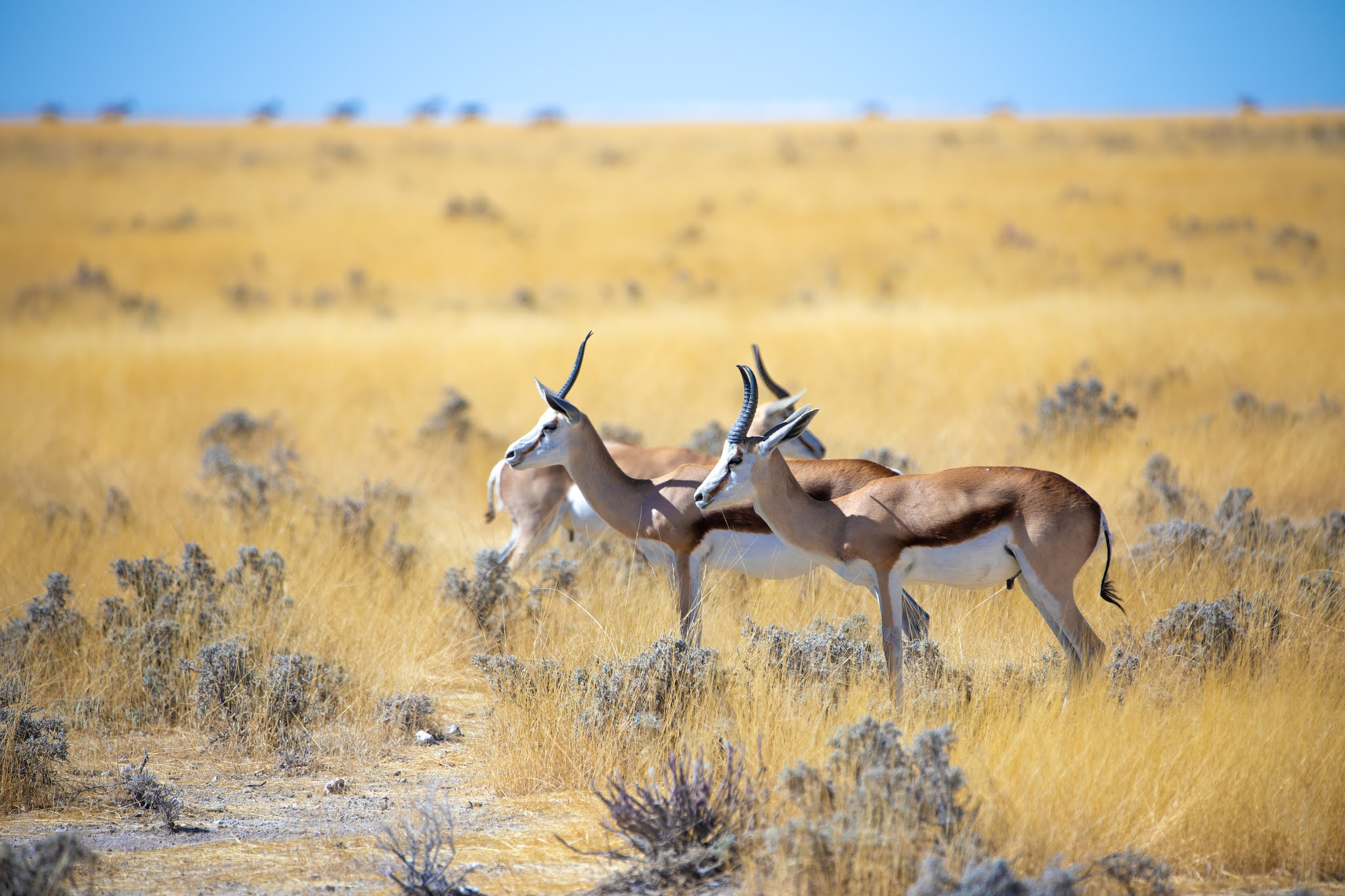 50+ Blackbuck's HD Pictures - World Fastest 6th Land Animals