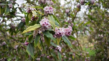 15 plantas que aportan interés al jardín en invierno
