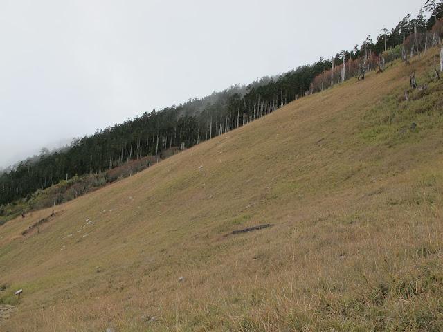 IMG 6027 - 台中登山│台灣第二高峰,雪山主峰、東峰兩天一夜攻頂!這兩天是我最難熬的一夜