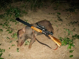berburu babi hutan dengan samyang sumatra