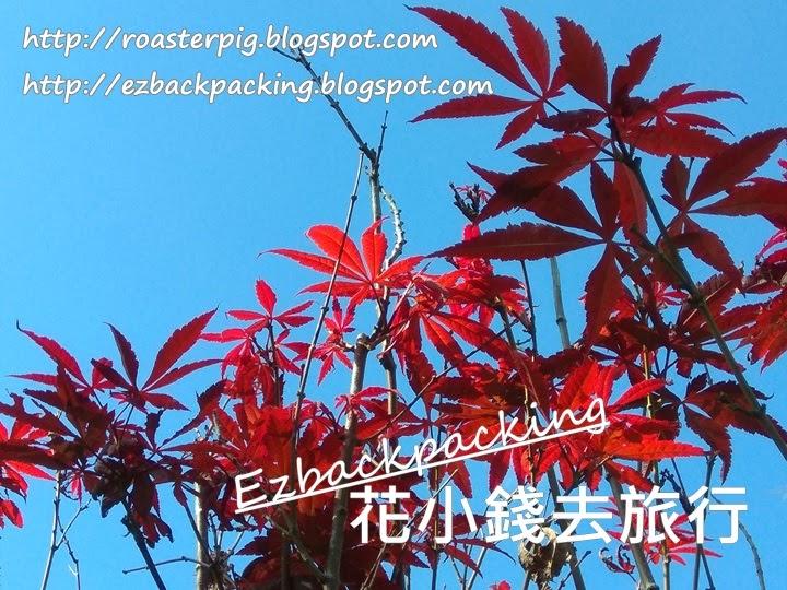 香港 日本楓