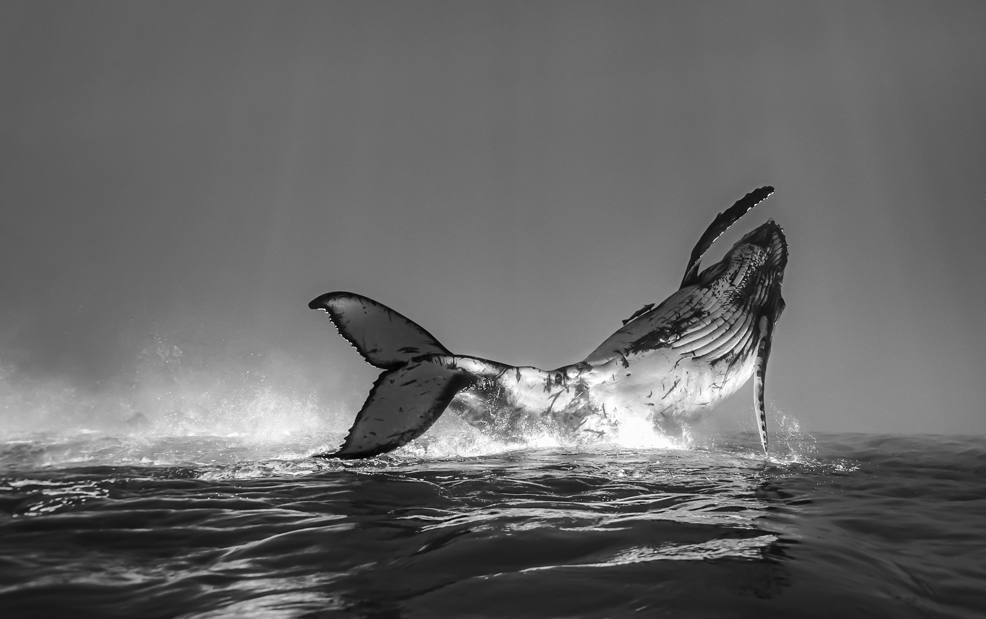Ocean Photography Awards 2020 Introduction