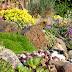 Steingarten anlegen leicht gemacht