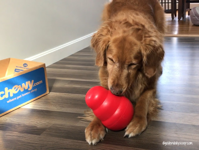 chewy influencer review of the kong wobbler interactive dog toy