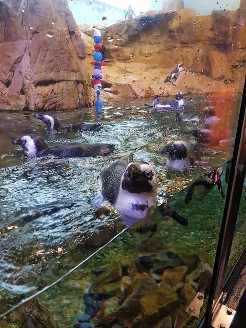 New Orleans, aquarium, penguins, tourist, blogger, summer, travel
