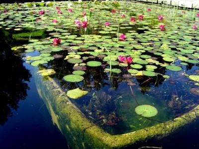 Acuarios y estanques tutoriales algas en el estanque for Nombre de estanque pequeno para tener peces