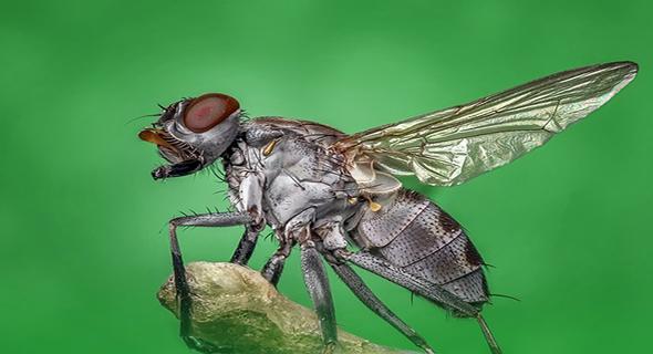 Ini Dia 7 Kekuatan Tersembunyi Lalat