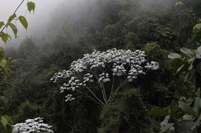 Medellín: imágenes de un caleidoscopio