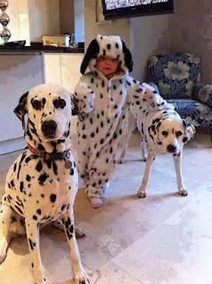 صور كلاب حلوين