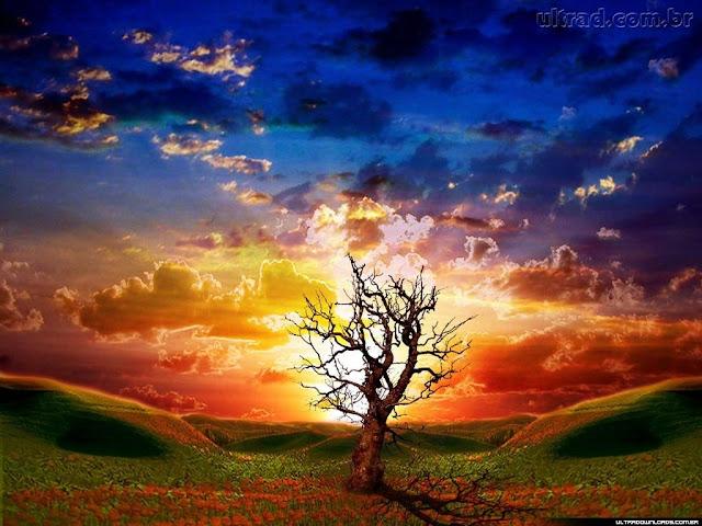 http://1.bp.blogspot.com/-7IuHAM1j5NI/Tnxj1lmkacI/AAAAAAAAD88/ORIMeJ8GrvU/s400/46503_Papel-de-Parede-Contraste-Natural--46503_1024x768.jpg