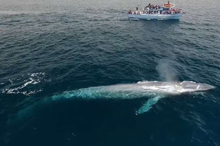 """الفيديو الأصلي للحوت الأزرق """" فيديو يوتيوب صوت الحوت الازرق في ليبيا والجزائر ومصر امس كامل وحقيقة الفيديو بصوت واضح اكبر حوت علي وجه الأرض"""