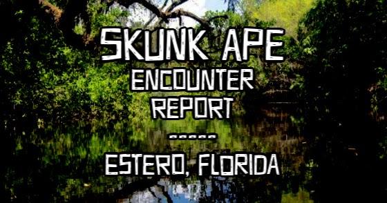 Skunk Ape Encounter Report - Estero, Florida