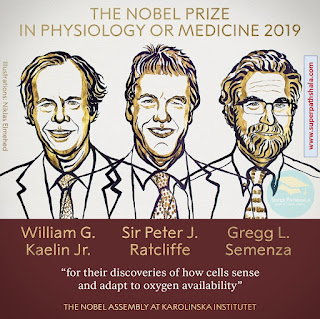 The Nobel Prize in Physiology or Medicine 2019 - William G. Kaelin Jr, Sir Peter J. Ratcliffe and Gregg L. Semenza