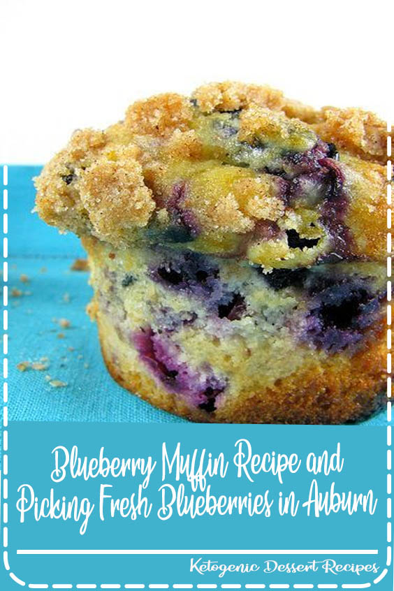 The Best Blueberry Muffin Recipe and Picking Fresh Blueberries in Auburn  Blueberry Muffin Recipe and Picking Fresh Blueberries in Auburn