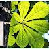 Origem da fotossíntese nas plantas datada em 1,25 bilhões de anos atrás