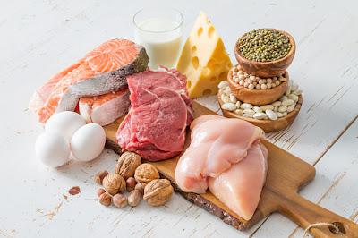 Protein vs fat