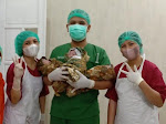 Bayi Kembar 3 Lahir di Rumah Sakit Sinar Kasih Toraja