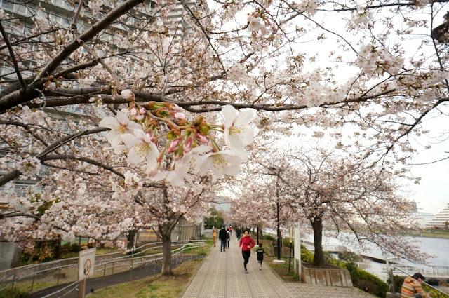 Tips Liburan Murah ke Jepang Dengan Promo Air Asia