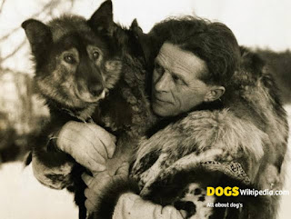 Togo dog, Disney togo dog real, togo the dog, togo movie dog real, balto, balto dog, balto siberian husky, Siberian husky dog breed, togo sled dog, togo dog and balto, togo dog real story, balto movie, Togo die, tog is real, togo west Africa, Togo does the dog die, togo movie true story, togo real dog