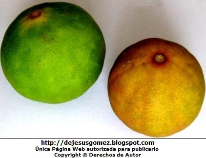 Foto limones - limón verde y limón seco. Foto de limones de Jesus Gómez