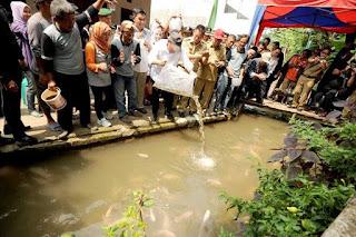 Menebarkan bibit ikan di selokan
