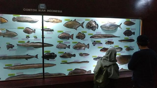Museum Zoologi