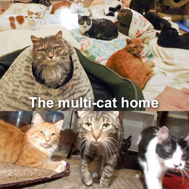 Domestic cats are not adapted to living in close proximity to each other
